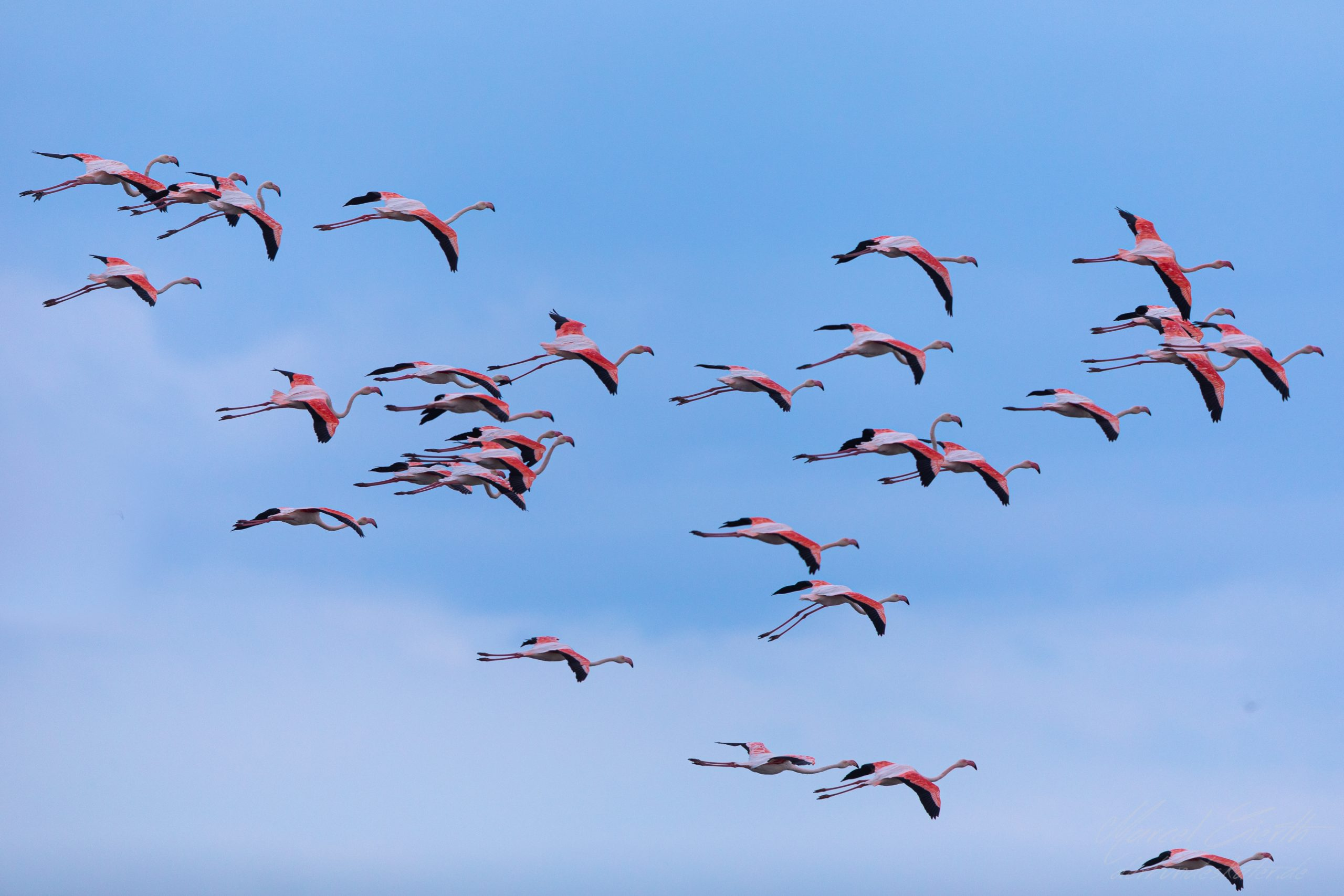 Flamingos im Podelta - Fotograf Marcel Gierth